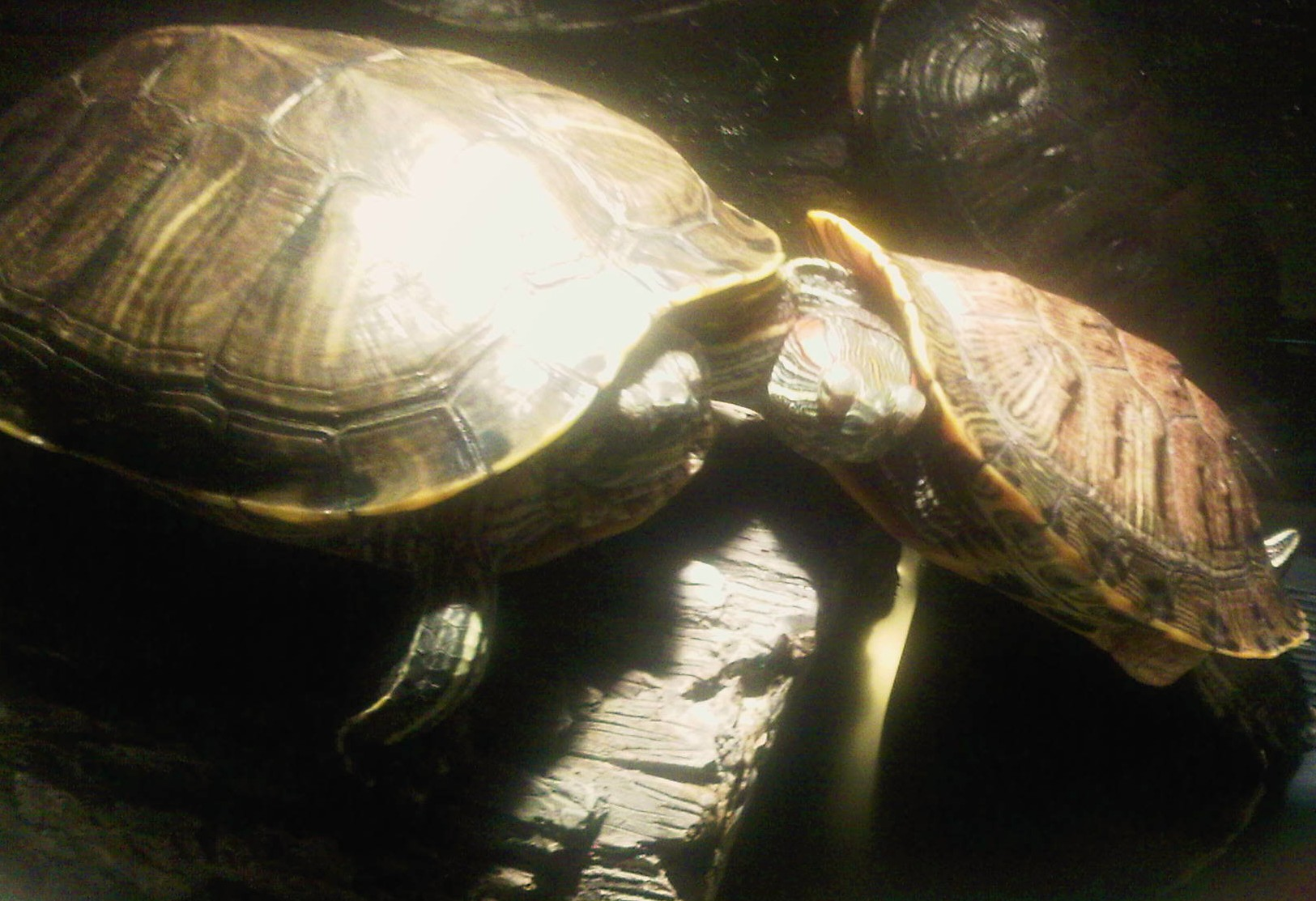 Homeopathy for Turtles 1