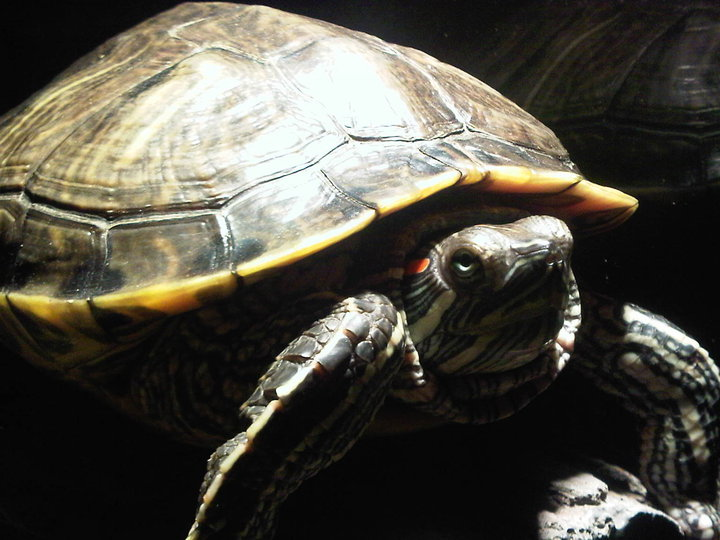 Homeopathy for a Turtle 2