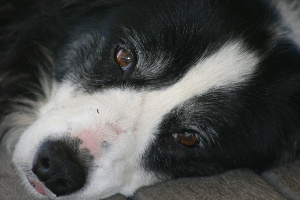 A Dog's Life: Molly's Mange, Eczema and Lack of Confidence 1