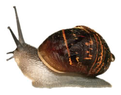 Michelle, snails, and homeopathy 5