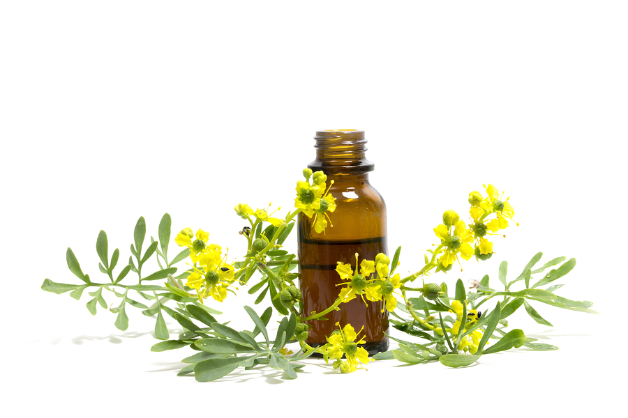 Rue (Ruta graveolens) branch with flowers and a bottle of essential oil isolated on a white background medieval medicinal plant
