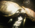 Homeopathy for a Turtle 1