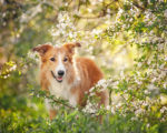 12 Homeopathic Remedies for Your Dog 1
