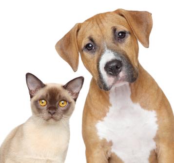 Animal Prophylaxis 1