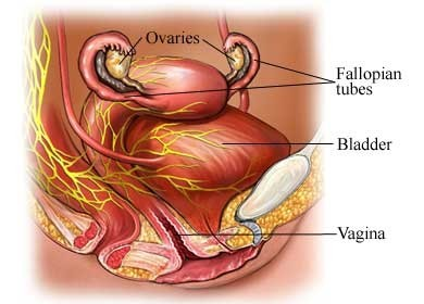 Homeopathy for Bladder Problems 1
