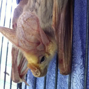 Batty Rescue for Tiny, Carnivorous Animal 2