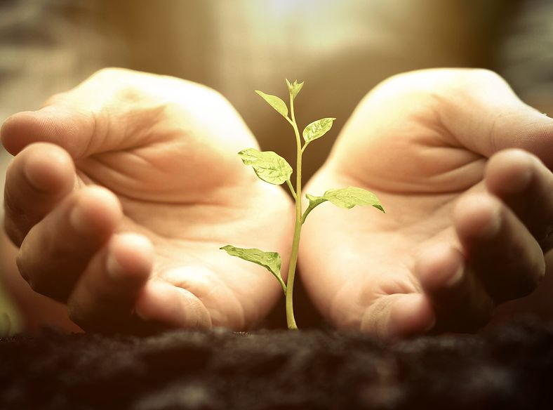 Homeopathy and Sustainability 1