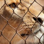Delhi Zoo Uses Homeopathy for Its Animals