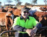 Happy Cows, Happy Farmer 2