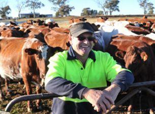 Happy Cows, Happy Farmer 1