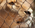 Delhi Zoo Uses Homeopathy for Its Animals 10