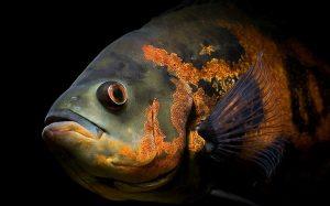 Homeopathy and Fish to Ward Off Encephalitis 1