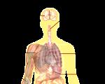 Remedies for Flu-like Symptoms 3