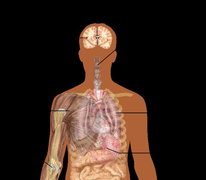 Remedies for Flu-like Symptoms 10