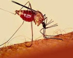 Homeopathy Used to Combat Malaria 4