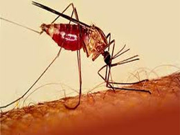 Homeopathy Used to Combat Malaria 1