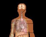 Homeopathy and the Northern Hemisphere flu 3