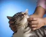 Safe and Healthy Cats with Homeopathy 8