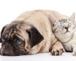 Survey: Cats and Dogs Improve 5