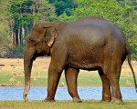 Homeopathy for elephants 7