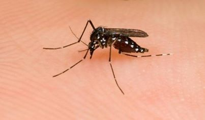 Thailand Government uses homeopathy for dengue fever 19