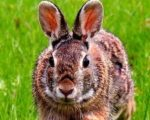 Rabbit homeopathy 7