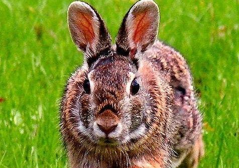 Rabbit homeopathy 1
