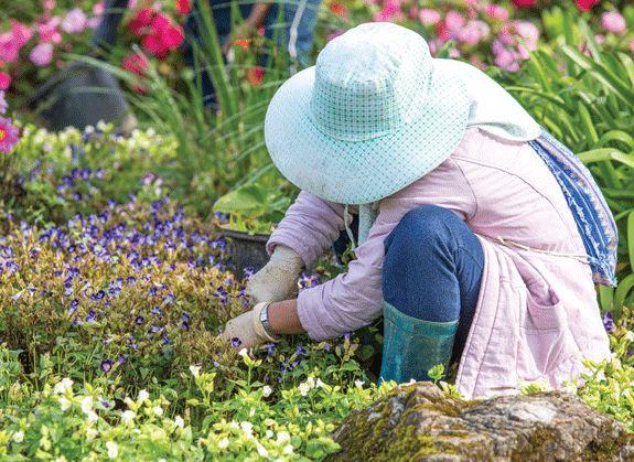 Homeopathy - to keep gardeners healthy 4