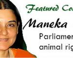 Homeopathy at the animal shelter 2