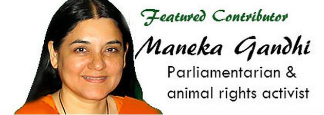 Homeopathy at the animal shelter 5