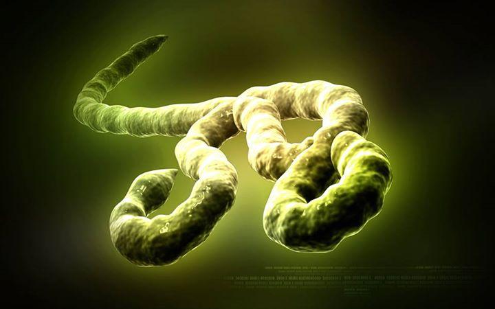 Ebola Virus - an untreatable disease? 3