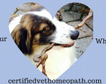 Veterinary homeopathy can help pets with heart disease 3