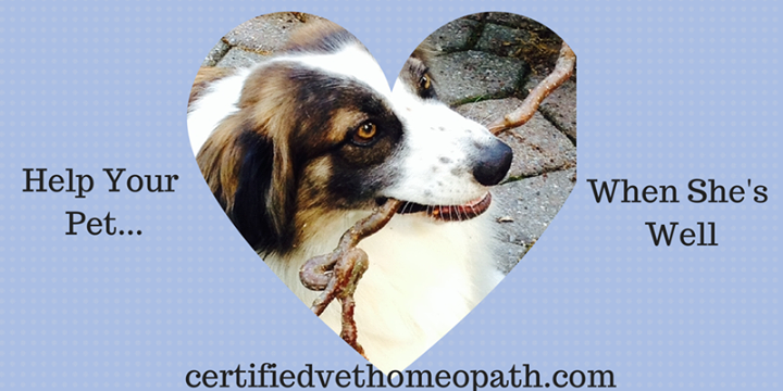 Veterinary homeopathy can help pets with heart disease 2