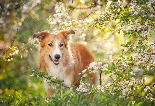 Homeopathic Remedies for Your Dog 6