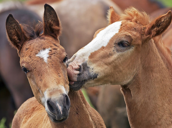 First-aid homeopathy for horses 1