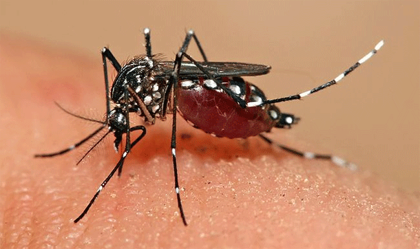 The Homeopathic Management of Dengue Fever 3