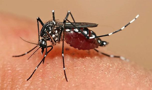 dengue_fever-mosquito-bite