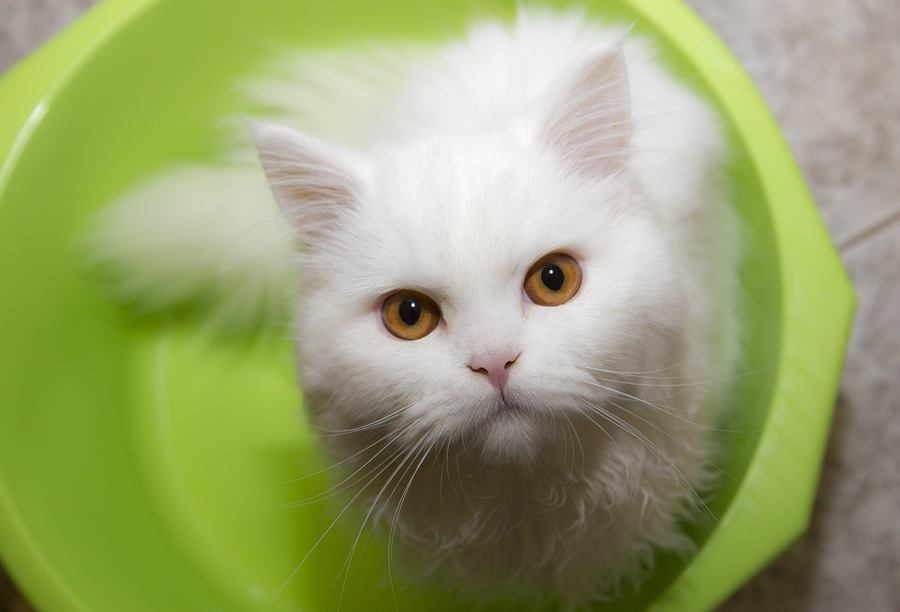 Kiki the cat and homeopathy 1