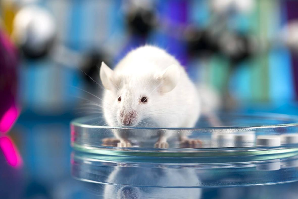 No excuse for animal experimentation in homeopathy 1