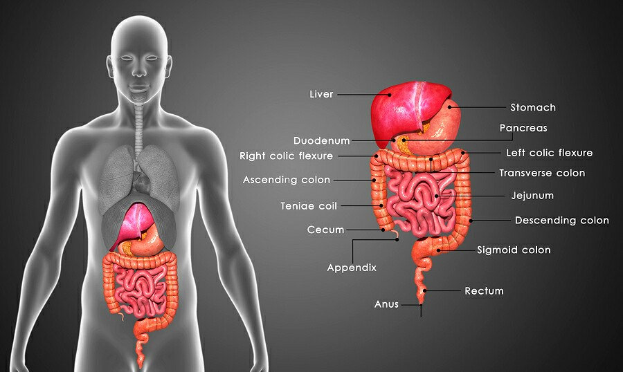 Study Homeopathy Used For Stomach Gallbladder Pancreatic And