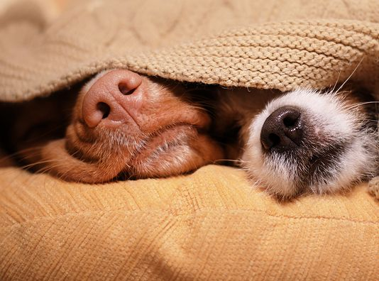 Remedies for Kennel Cough 1