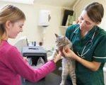 Homeopathy kills pets? 7