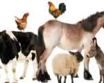 Veterinary Homeopathy