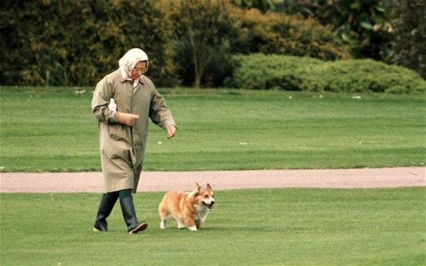 Remedies for the Queen's Corgis 4
