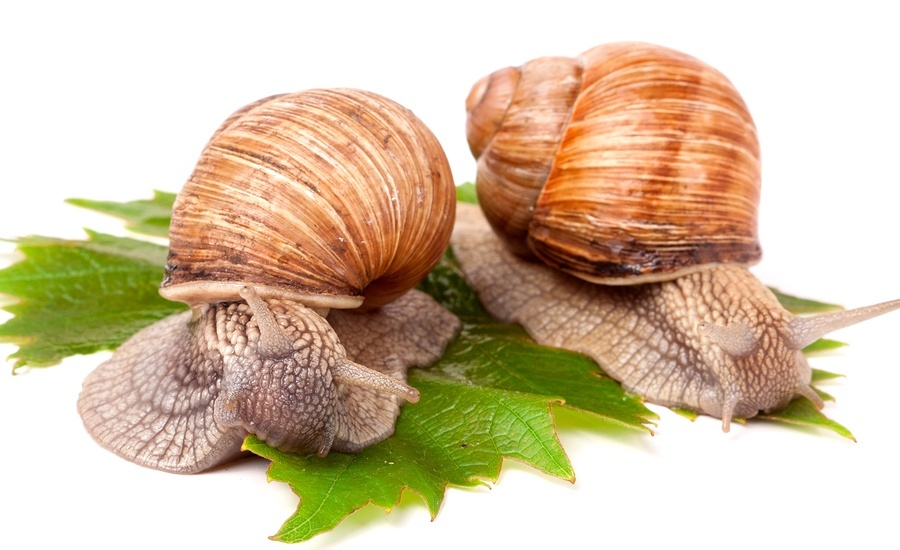 two_snails
