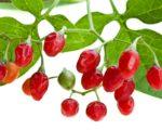 Know Your Remedies: Belladonna (Bell.) 3