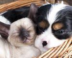 Offer 3: Save On Dog & Cat Prophylactics 11