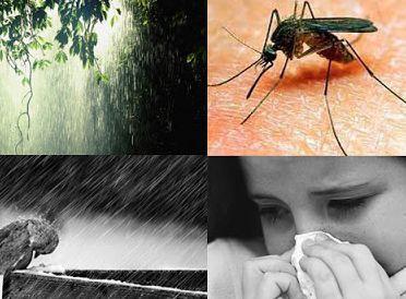 Thrive During the Rainy Season 3