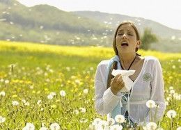 Hay Fever and Homeopathy 1
