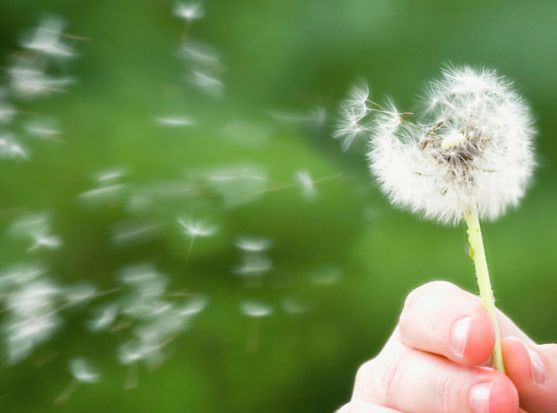 Sneeze No More: Hay Fever Help with Homeopathy 2